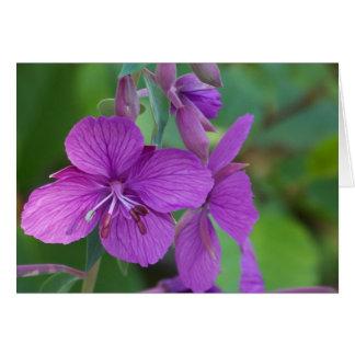 開花のFireweed カード