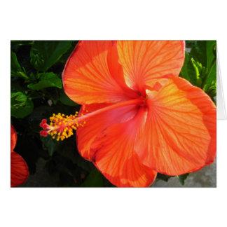 開花-ブランクの愛 カード