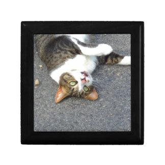 間抜けの逆さまの子猫 ギフトボックス