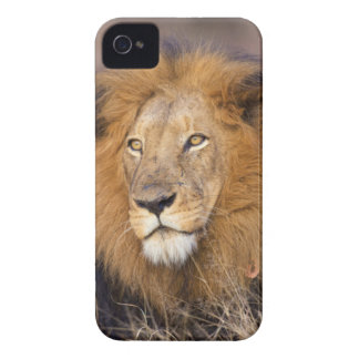 間隔調査しているライオンのポートレート Case-Mate iPhone 4 ケース