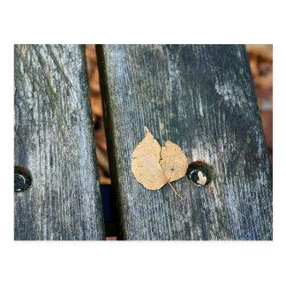 間-静物画の写真-をベンチの葉休ませて下さい ポストカード