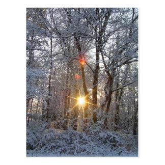 降雪の日の出のCricketDiane Snowyの森林日曜日 ポストカード