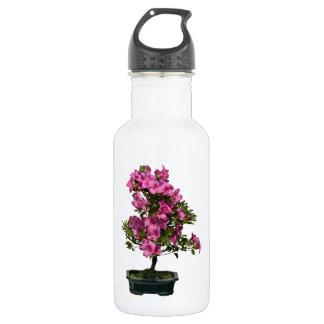 隔離された盆栽のシャクナゲの咲くこと ウォーターボトル