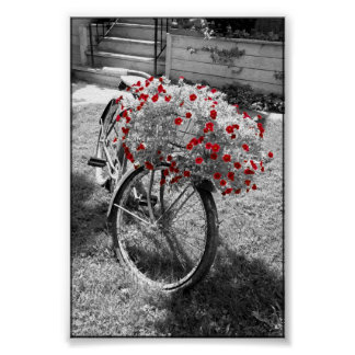 隔離された赤い色によっては白黒自転車が開花します ポスター