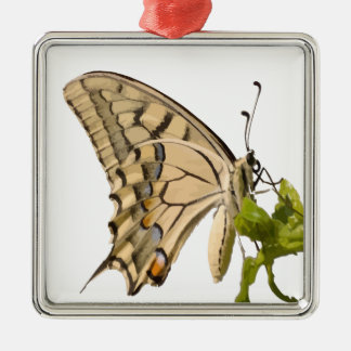 隔離されるアゲハチョウの蝶ベクトル メタルオーナメント