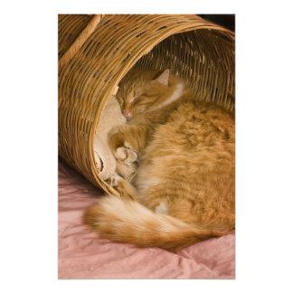 障害で眠っているオレンジ虎猫 フォトプリント