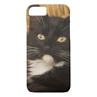 障害のふたの黒く及び白い短い髪の子ネコ、 iPhone 8/7ケース