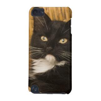 障害のふたの黒く及び白い短い髪の子ネコ、 iPod TOUCH 5G ケース