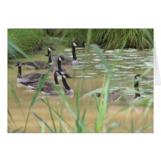 隠された平静のカナダのガチョウの自然カード カード