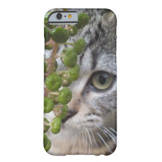 隠れる子ネコの目電話6箱 BARELY THERE iPhone 6 ケース