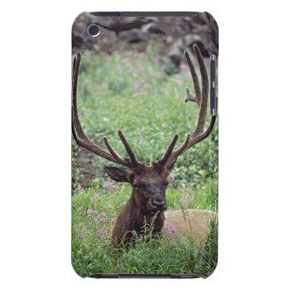 (雄ジカの)枝角を搭載する高山草原で休んでいるBullのオオシカ Case-Mate iPod Touch ケース