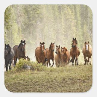 集合の間に小さい丘の頂点に達している馬 スクエアシール