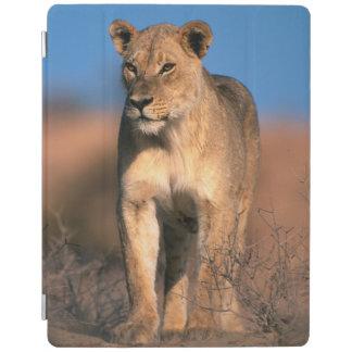 雌ジシ(ヒョウ属レオ)のポートレート iPadスマートカバー