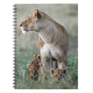 雌ジシ(ヒョウ属レオ)及びカブス|のマサイ語マラ ノートブック