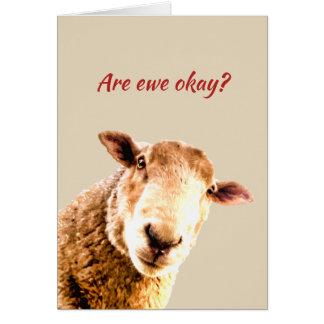 雌ヒツジのおもしろいなヒツジ動物のユーモアの考えること カード