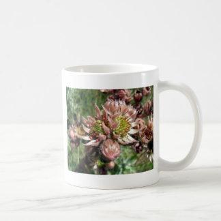 雌鶏およびひよこ(Sempervivum)の花 コーヒーマグカップ