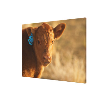 雑種の子牛 キャンバスプリント