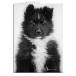 雑種犬、スタジオの打撃 グリーティングカード