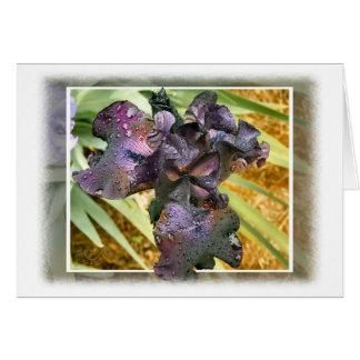 雨とのアイリス暗い紫色はカードを落とします カード
