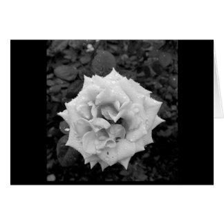 雨の後の白いバラ カード