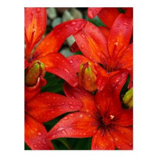 雨の後の美しく赤いaztekユリ ポストカード