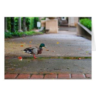 雨の日のアヒルのバルボア公園サンディエゴ カード
