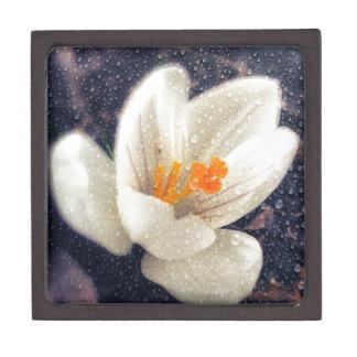 雨の日のクロッカスの花 ギフトボックス