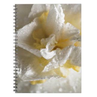 雨の日のラッパスイセン ノートブック