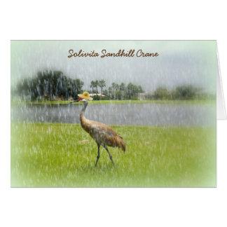 雨のSandhillクレーン! Solivita Poinciana FL カード