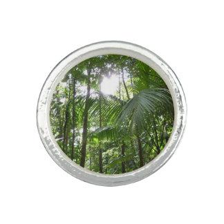 雨林のおおいの熱帯緑による日光 リング
