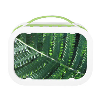 雨林のシダ ランチボックス