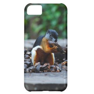雨林のボロネオの野性生物のリス iPhone5Cケース