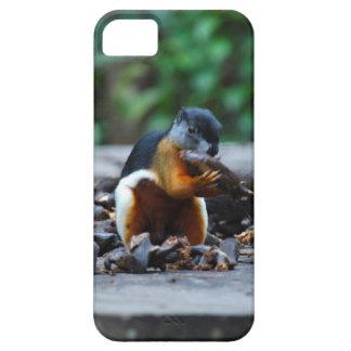 雨林のボロネオの野性生物のリス iPhone SE/5/5s ケース
