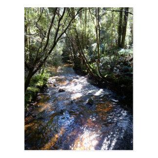 雨林の流れ ポストカード