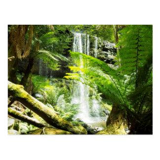 雨林の滝 ポストカード