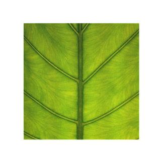 雨林の葉 ウッドウォールアート