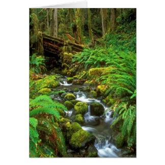 雨林オリンピックNP カード