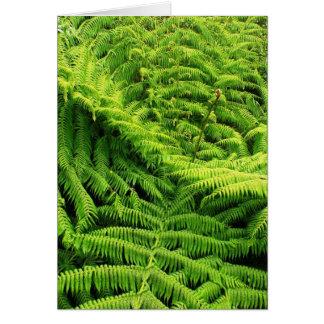 雨林 カード