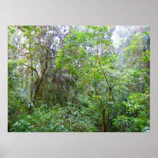 雨林 ポスター