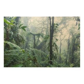 雨林、Monteverdeの雲の森林、コスタリカ ウッドウォールアート
