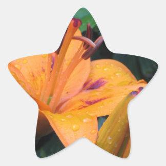 雨滴が付いているオレンジ花 星シール