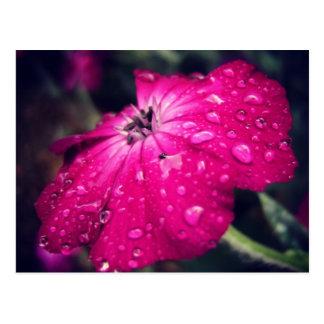 雨滴が付いている花 ポストカード