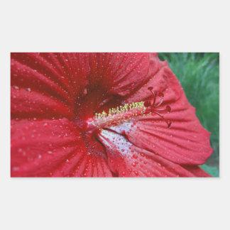 雨滴の写真が付いている赤いハイビスカスの花 長方形シール