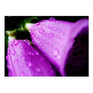 雨滴を持つ紫色のfoxglove ポストカード