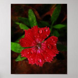 雨滴を持つ赤いナデシコ ポスター
