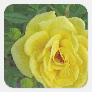 雨滴を持つ黄色バラ スクエアシール