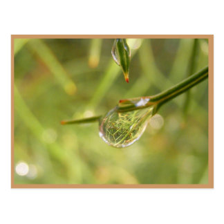 雨滴を通した庭 ポストカード