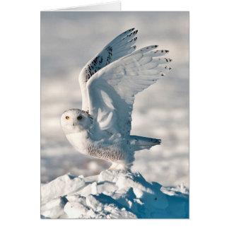 雪から出発しているSnowyのフクロウ カード