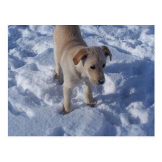 雪が多い子犬の郵便はがき ポストカード