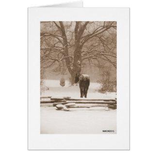 雪が多い日の黒い馬 カード